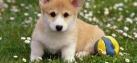 addestramento del cane