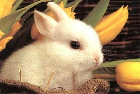 come allevare un coniglio nano