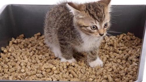 Insegnare al gatto come utilizzare la lettiera dojo animali - Come fare il bagno al gatto ...