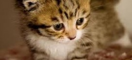 alimnetazione corretta del gatto