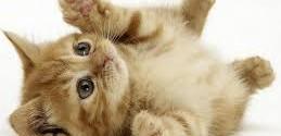 come calmare un gatto iperattivo