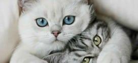 gatti quale cibo scegliere