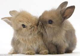 Come addestrare un coniglio nano dojo animali - Lettiera coniglio nano ...