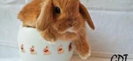 come riconoscere se il proprio coniglio sta male