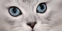 depressione del gatto cosa fare