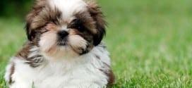 come abituare il cane a fare i bisogni fuori casa