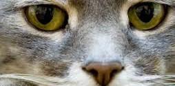 gatto: sintomi della rabbia felina