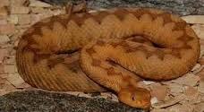 come tenere un serpente in casa