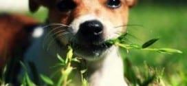 gastrite nel cane