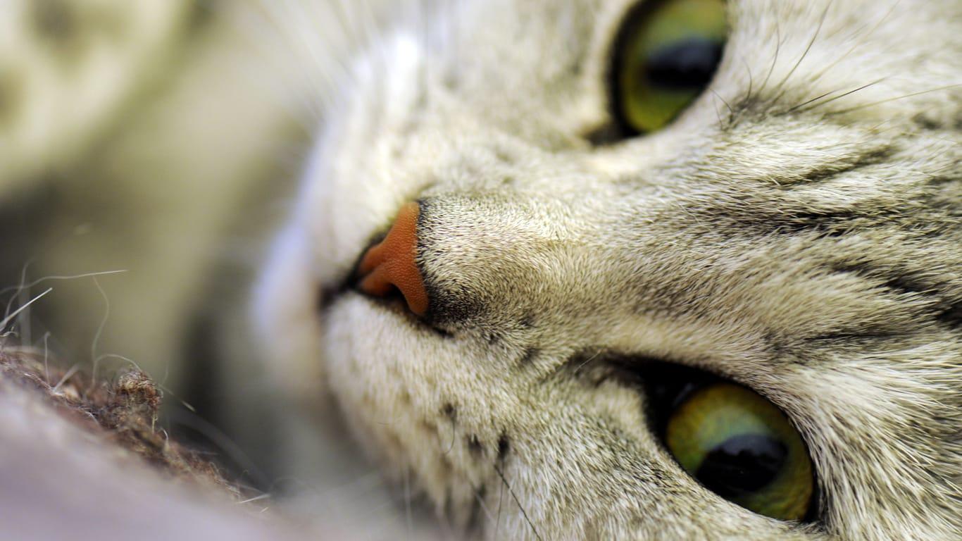 Коты картинки на рабочий стол